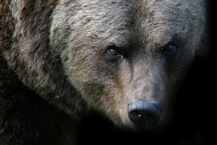 Vodafone shares mauled by bears again - Analysis